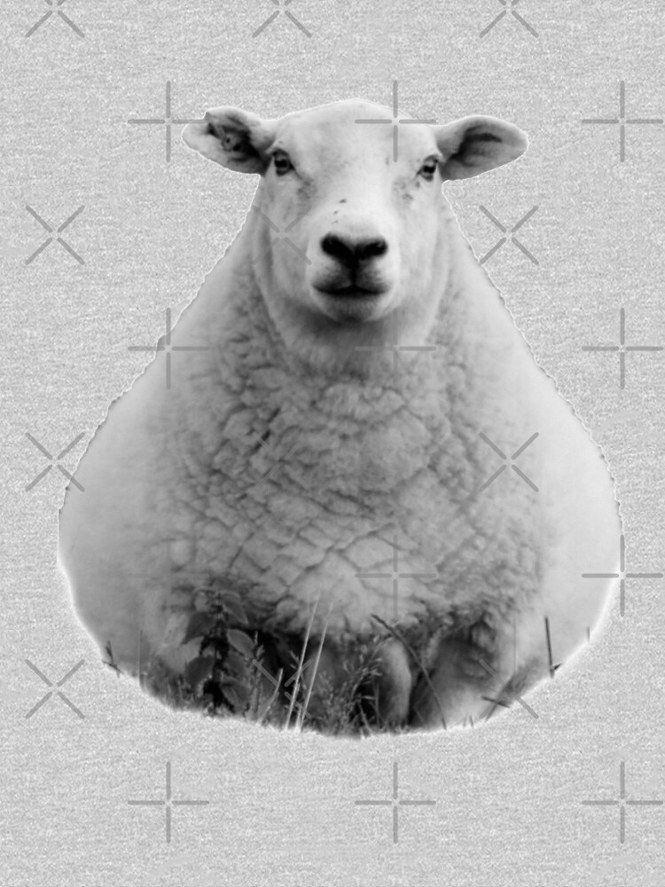 Black and White Sheep in Field by tribbledesign