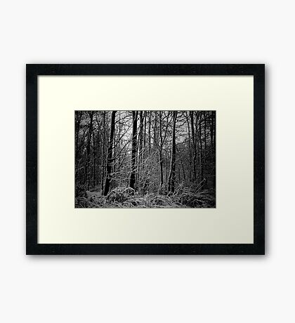 Winter Woods Framed Print