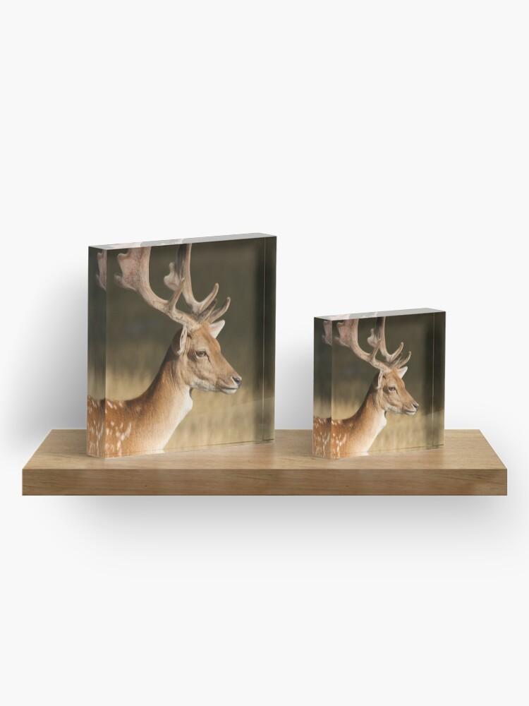 Alternate view of Portrait of a Fallow Deer Acrylic Block