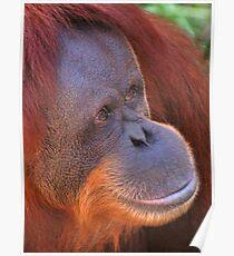 Primate Vogue Poster