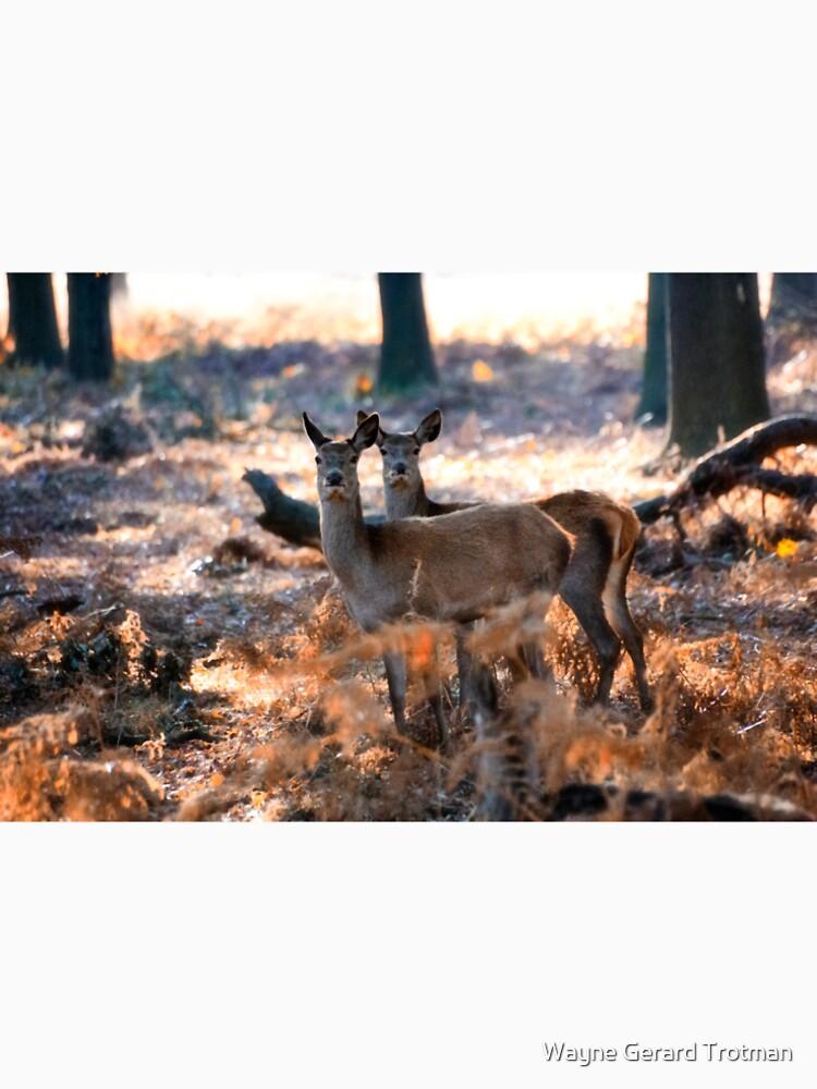 Double Deer by redmoondragon