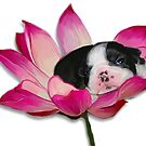 Flower baby2 by Cazzie Cathcart