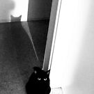 Black Cat at Night von Marianna Tankelevich