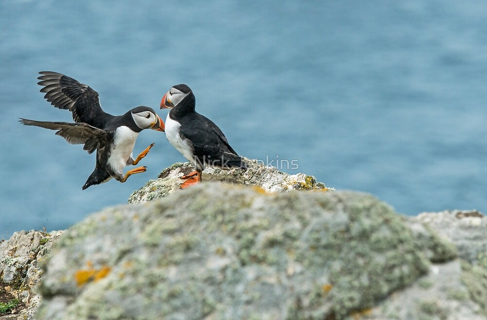 Puffin Crash by Nick Jenkins