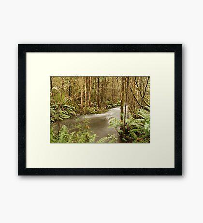 Up the creek... Framed Print