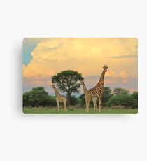Giraffe - Sunset Storm Watchers Canvas Print