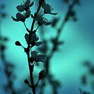 Blossom Blur by Jocelyn  Parry-Jones