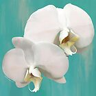 WHITE ORCHIDS ON AQUA by Shirley Kathan-Sayess