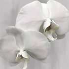 SHABBY CHIC ORCHIDS by Shirley Kathan-Sayess