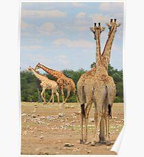 Giraffe - Jealousy and Funny Love Poster