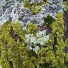 moss amongst the lichen by elsha