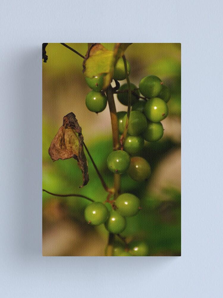 Alternate view of Convolvulous Berries Canvas Print