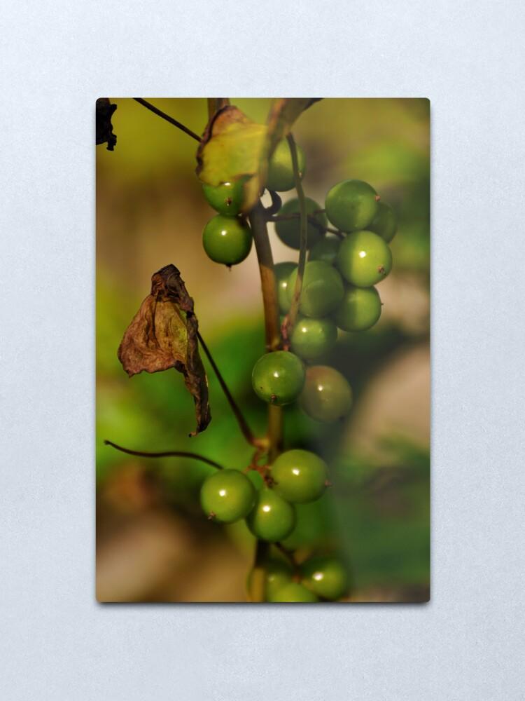 Alternate view of Convolvulous Berries Metal Print