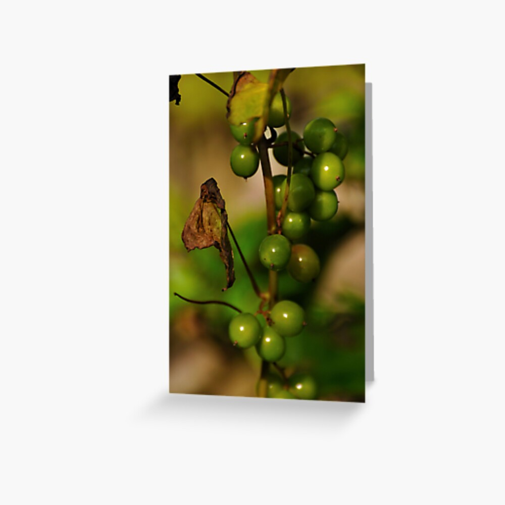 Convolvulous Berries Greeting Card