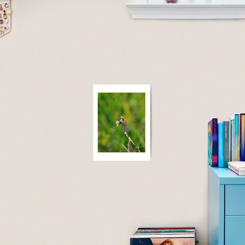 Common Blue Butterflies Art Print