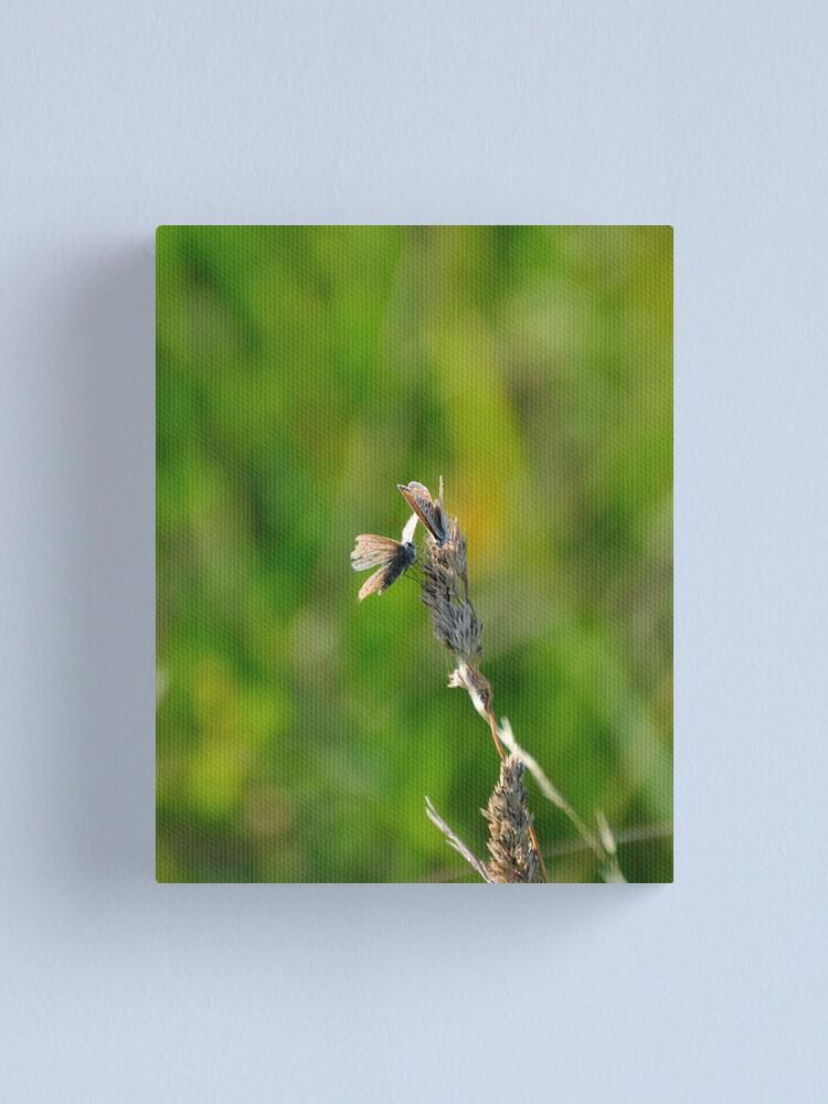 Alternate view of Common Blue Butterflies Canvas Print