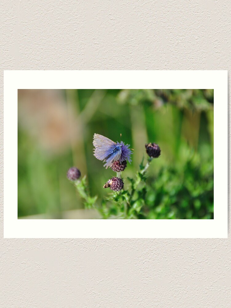 Alternate view of Common Blue Butterfly Art Print