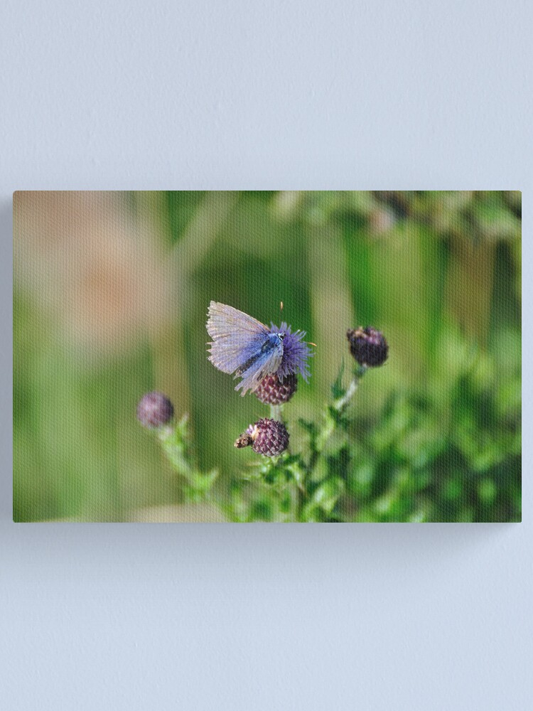 Alternate view of Common Blue Butterfly Canvas Print