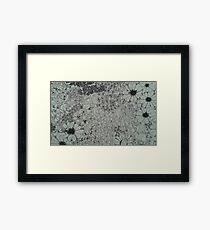 Coastal Blooms  Framed Print