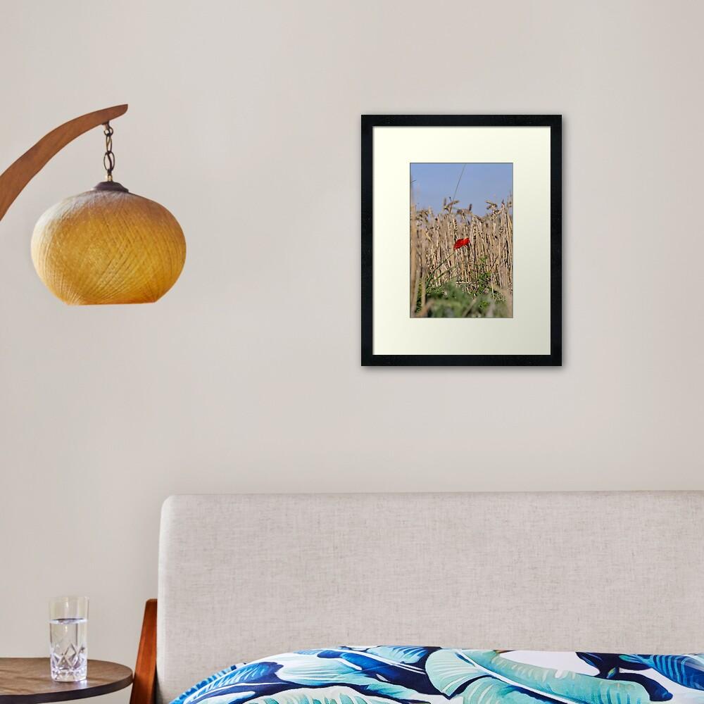 Poppy In Field #2 Framed Art Print