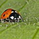 Ladybird 2 by Gareth Jones