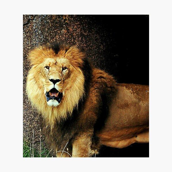 The lions den Photographic Print