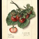Vintage Strawberries by Douglas E.  Welch