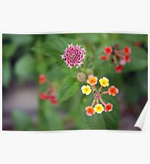 Small flowers Poster