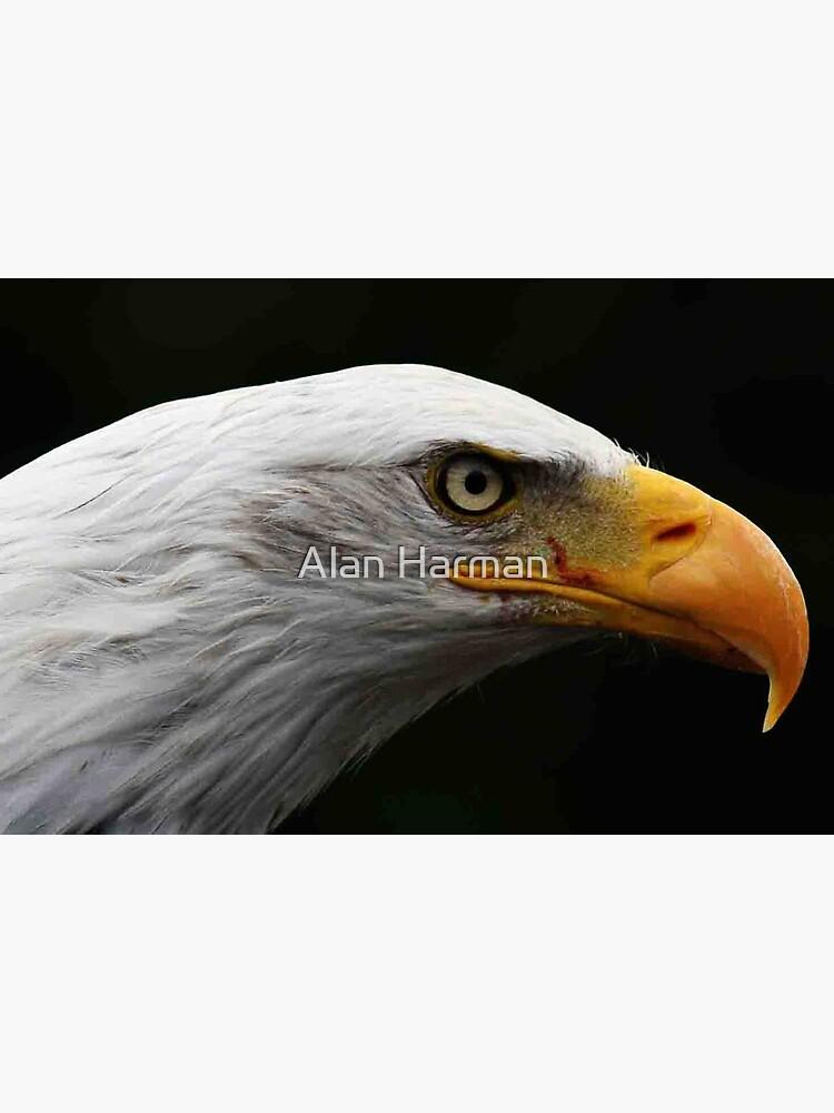 Bald Eagle by AlanHarman