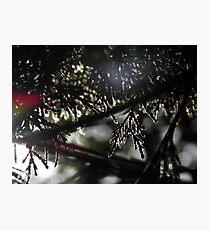 Sunshine hitting the summer fur tree Photographic Print