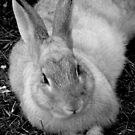 bw bunny by vigor