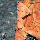 Leaf  it  till next  year by Alexander Mcrobbie-Munro