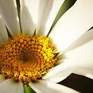 daisy by sabrina card