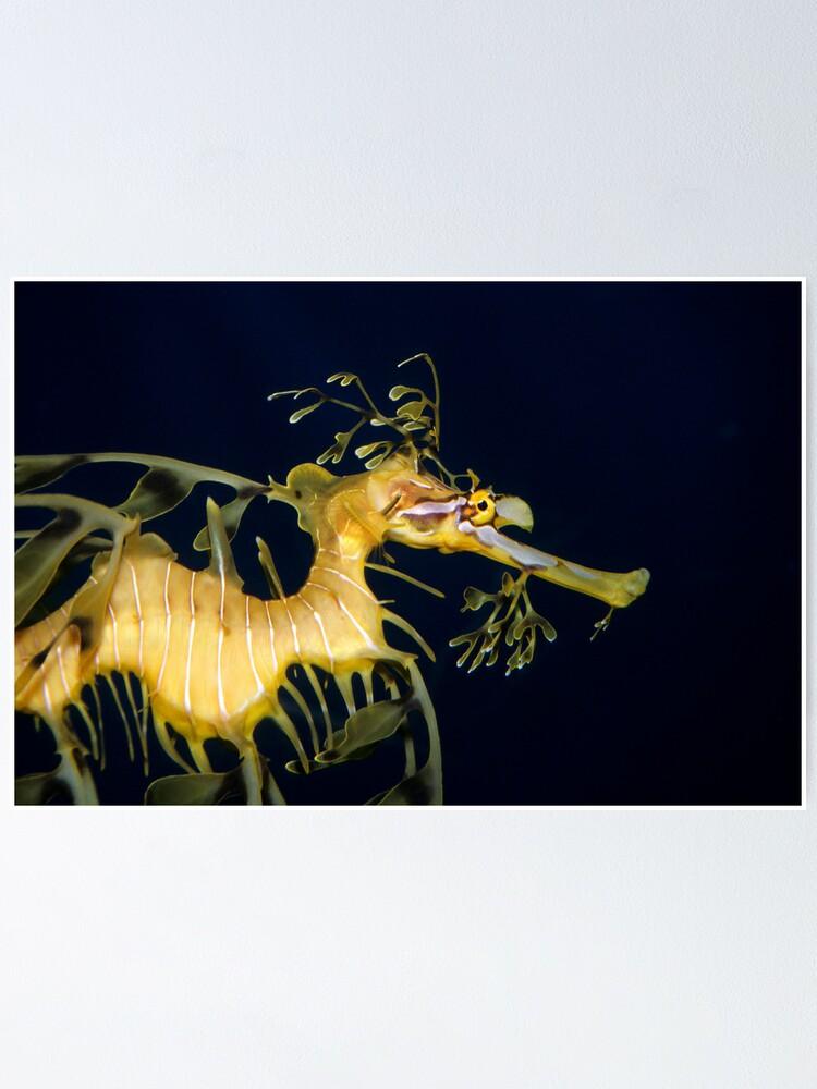 Alternate view of Leafy sea dragon Poster