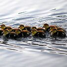 12 Little Ducklings by Colleen Rohrbaugh