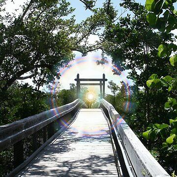 follow your light by kotoro