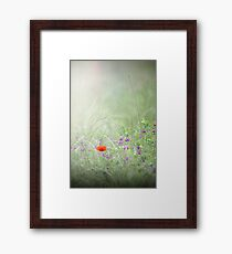 Rain on Poppies and Sweet Peas Framed Print