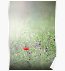 Rain on Poppies and Sweet Peas Poster