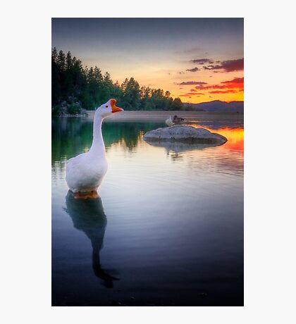 Hey Duck Photographic Print