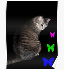 Cat and Butterflies ©  Poster