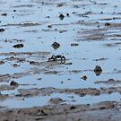 Mud Wrestling by MDC DiGi PiCS
