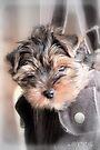 Yorkie puppy by aMOONy