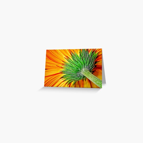 Macro Flower Orange Daisy Greeting Card