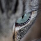 Cat eye by Michelle Dewis