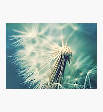 Not sure when you stop thinking dandelions are beautiful... Photographic Print