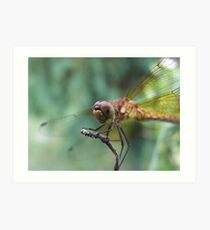 I'm Ready For My Close Up!! Art Print
