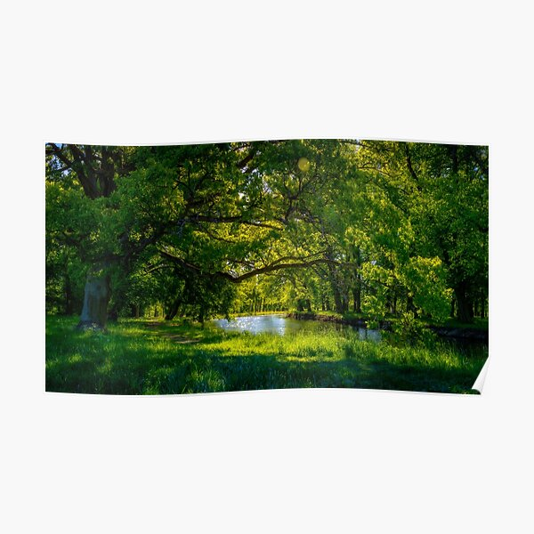 Summer Morning in the Park Poster