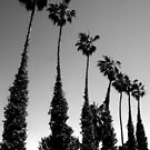 Palms, Del Mar, California by Heather Friedman