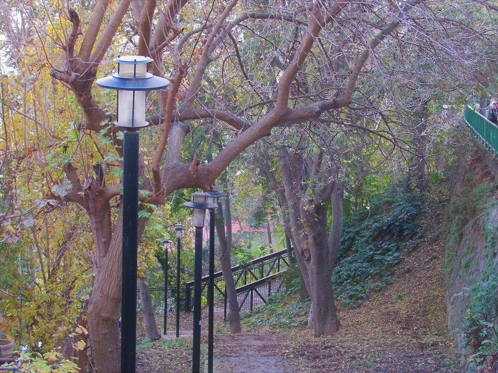 Lamps in Fall by tomeoftrovius