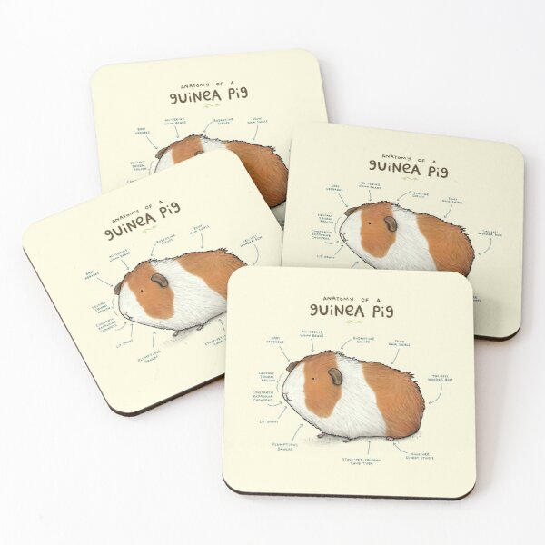 Anatomy of a Guinea Pig Coasters (Set of 4)